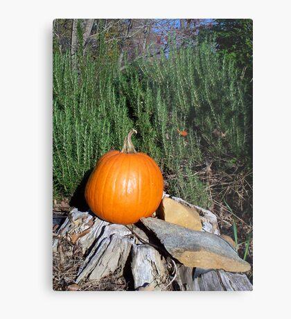 Pumpkin Time 5 Metal Print