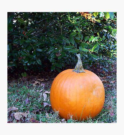 Pumpkin Time 6 Photographic Print