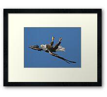 Mid Flight Flip Framed Print
