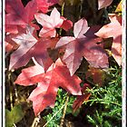 Sweet Sweetgum 2 by WalnutHill
