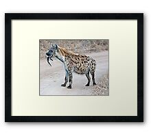 Hyena With Serious Overbite Framed Print