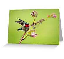 On a Wing and a Prayer Hummingbird Art Greeting Card