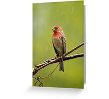 House Finch in the Rain Greeting Card