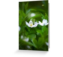 Canada Anemone Wildflowers  Greeting Card