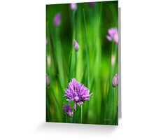 Garden Chives Greeting Card
