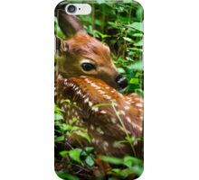 White Tailed Deer Fawn iPhone Case/Skin