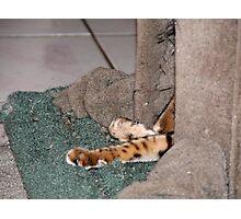 Tiger's Lair Photographic Print