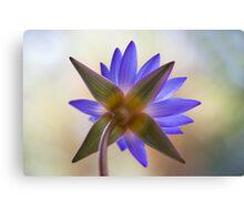 Shining Thru Two - purple waterlilly  Canvas Print