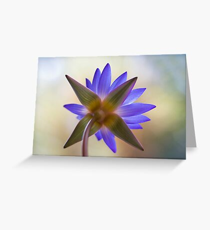Shining Thru Two - purple waterlilly  Greeting Card