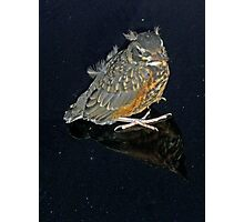 New born Robin Photographic Print