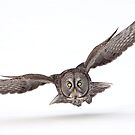 Under The Radar/Great Gray Owl by Gary Fairhead