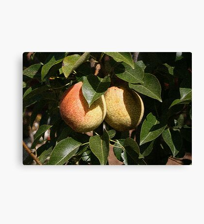 Pear Fruit Canvas Print