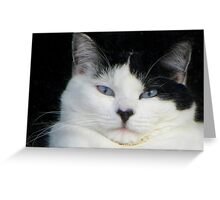 What A Kitty Face Greeting Card