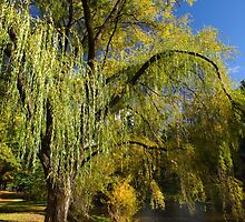 Autumn in Bright, Victoria, Australia by Darren Stones
