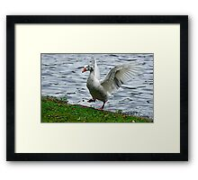 Goose In a Flap Framed Print