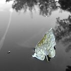 Leaf in the water by Ronda Basteyns