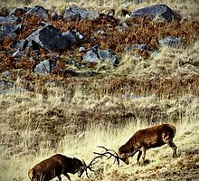 Galloway: stags in a landscape by Coigach
