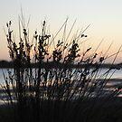 Grass silhouette by Catherine Davis