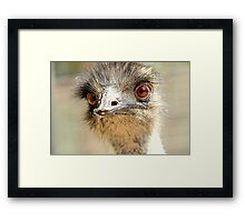 Yes... It Is I  Emu Framed Print