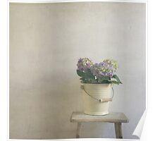 hydrangea resting on stool Poster