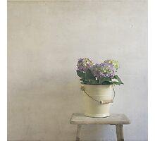 hydrangea resting on stool Photographic Print