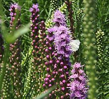 Summer Flowers, High Line, New York City's Elevated Garden and Park by lenspiro
