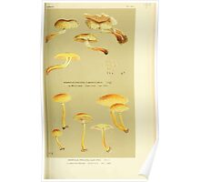 Illustrations of British Fungi by Mordecai Cubitt Cook 1891 V3 0439 AGARICUS  PHOLIOTA  CURVIPES Poster
