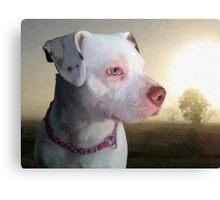 Bull Terrier a Dawn Canvas Print