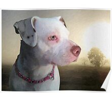 Bull Terrier a Dawn Poster
