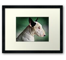 Bull Terrier on Green Framed Print