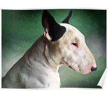 Bull Terrier on Green Poster