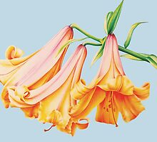 Lilies botanical fine art in pencil and watercolour by Sarah Trett