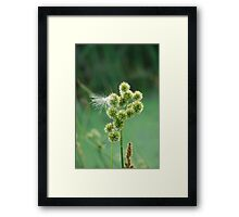 Green and Fuzzy Framed Print