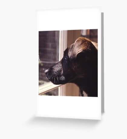 Kippa The Dog Greeting Card