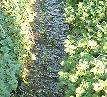 Little Creek in Arlington, WA by spaztasticphoto