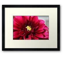 Red Dahlia Macro  Framed Print