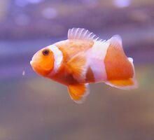 Clownfish is No Joke by Waitingstar