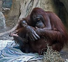 New at the Zoo - Erie, PA by Kathy Weaver