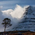 Caledonian Pine, Glen Torridon,West Highlands of Scotland. by photosecosse /barbara jones