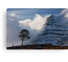 Caledonian Pine, Glen Torridon,West Highlands of Scotland. Canvas Print