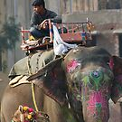 Jaipur Street Scene,Jaipur, Rajasthan, India by RIYAZ POCKETWALA