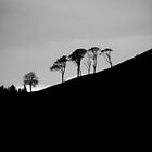 Silhouetted Trees On A Hillside by illman