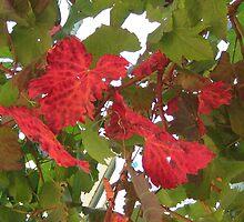 Autumn vine leaves by glenda50