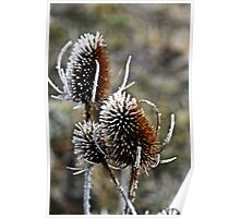 Frosty Reeds Poster