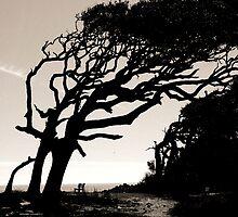 Jekyll Island Beach Driftwood 2 by erinmccoy