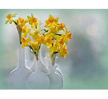A Touch of Spring Photographic Print