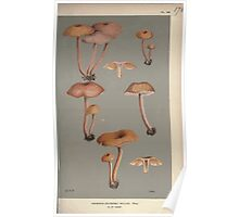 Illustrations of British Fungi by Mordecai Cubitt Cook 1891 V2 0133 AGARICUS  CLITOCYBE  BELLUS Poster