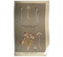 Illustrations of British Fungi by Mordecai Cubitt Cook 1891 V8 0213 AGRICUS  MYCENA  FLAVIPES Poster
