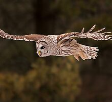 Barred Flying  by Gary Fairhead