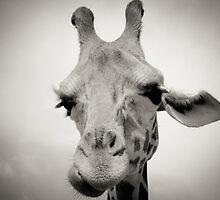 Giraffe I by Katera Troiano